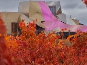 Private Rioja Wine Tasting Tour (Full day Tour) Photos