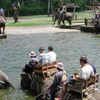 Rafting and Elephant Safari Ride