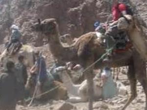 Ras Abu Galum camel Safari Photos