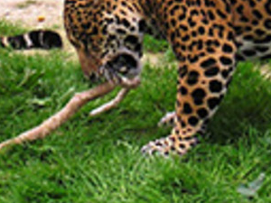 Rio Safari Elche ticket only Photos