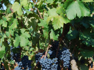 Salento wine tour: sun flavours