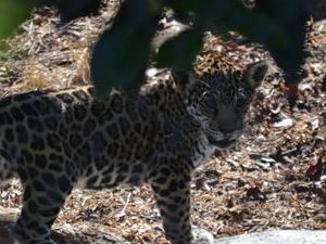San Diego Zoo 1-Day Pass Photos