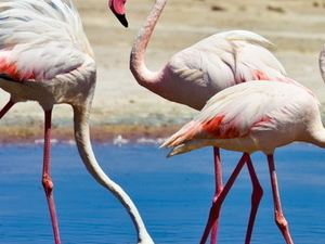 Sea and Flamingos + aperitif Photos