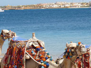 Snorkeling,Camel Riding In Blue Hole Around Sharm El Sheikh Photos