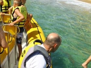 Snorkeling tours Photos