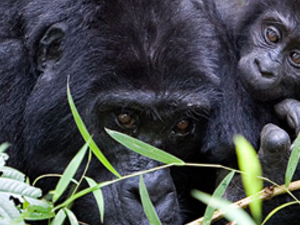 Thousand Hills Safari - Uganda and Rwanda Photos