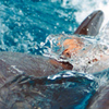 Tour To Swim With Dolphins In Sharm El Sheikh