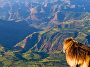 TREKKING AT THE HIGHEST PEAK OF ETHIOPIA WITH THE DRAMATIC LANDSCAPE OF SIMIEN MOUNTAIN Photos