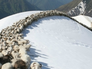 Trekking in the Great Caucasus Mountains Photos