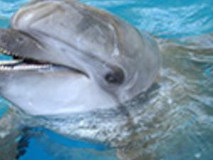 Troy Dolphin Show Photos