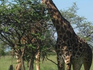 Volunteering in Tanzania - Teaching English Photos