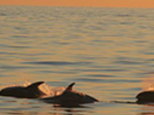 Whale watching in the Midnight Sun Photos