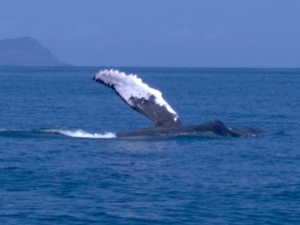 Whale Watching Tour at Samana's Bay, Dominican Republic