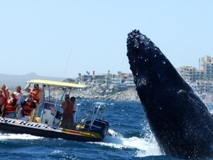 Whale watching tours Photos