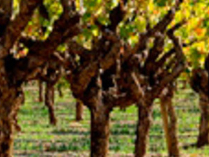 Wine Country Half Day Photos