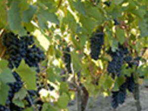 Wine Tour  - Colchagua Valley Photos