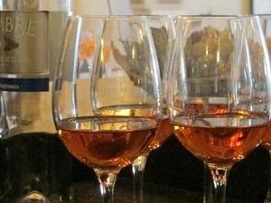 Wine tour in Setubal region Photos