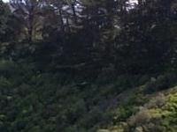 Peaceful retreat near CBD