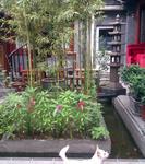 Happy Dragon Courtyard