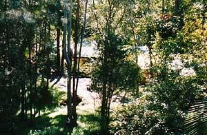Treetops Studios