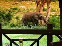 Protea Kruger Gate