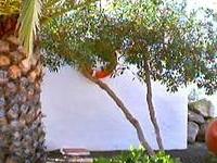 Castillo Beach Lowcost