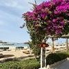 Festival Shedwan Golden Beach Resort