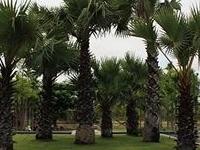 Pattara Resort and Spa, Phitsanuloke