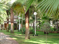 Resort Oasis