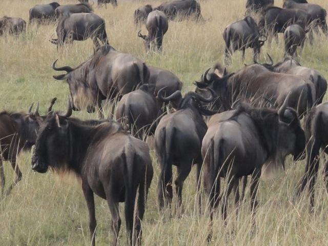 Maasai Mara & Around Lake Victoria Tour Photos
