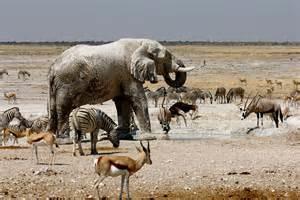 Etosha Safari Photos