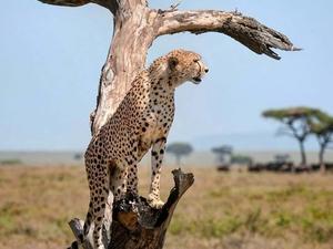 Big Cats Trip in Northern Tanzania Fotos