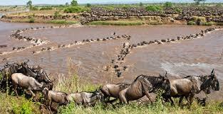 Tanzania & Kenya Safari Photos