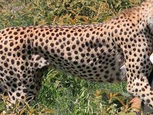 Southern to Western Circuit of Tanzania Safari Photos