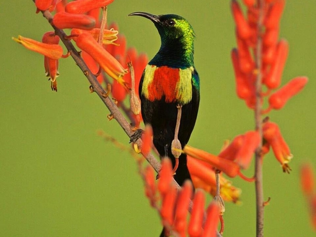 Tanzania Bird Watching Tour Photos
