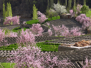 Cherry & Appricot Blossom Tour to Hunza Valley Photos