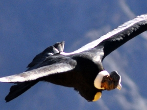Colca Canyon 02 Days/01 Night By tourism Bus Photos