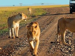 Family Tour in Kenya Photos