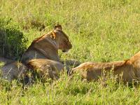 Masai Mara Paradise Safari