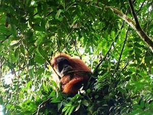 Orangutan and Tiger Tour Packages Photos