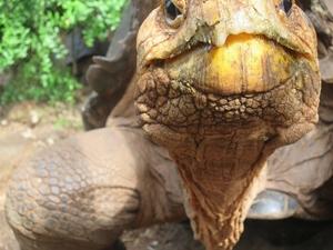 Galapagos Budget Island Hopping Photos