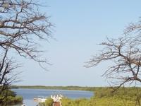 Mangrove Delta Sine Saloum
