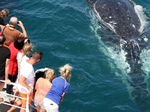Whale Watching Tour Photos