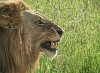 Kenya Trips