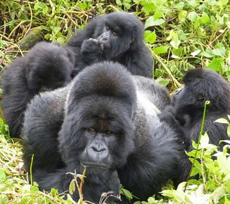 Gorilla Express Tour Photos