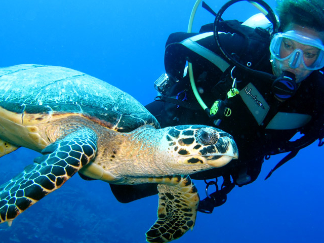 Stay and Dive Packages Photos