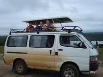 Gorilla Safari, Queen Elizabeth National Park and Chimps Photos