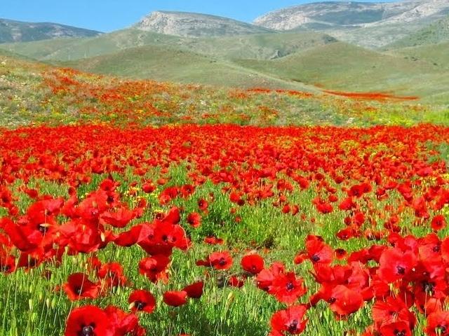 Roundtrip in Armenia Photos