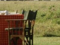 Amboseli, Nakuru, Mara
