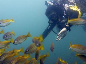 Scuba Diving Trip - 3 Dives